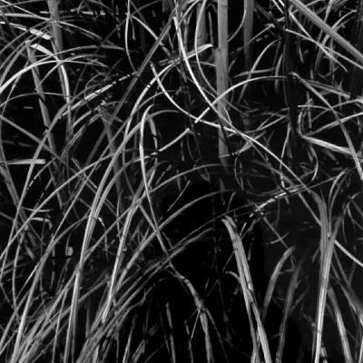 transparence végétale #15